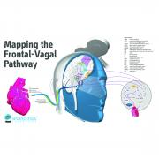 neuroCare_mapping_frontal-vagal_pathway